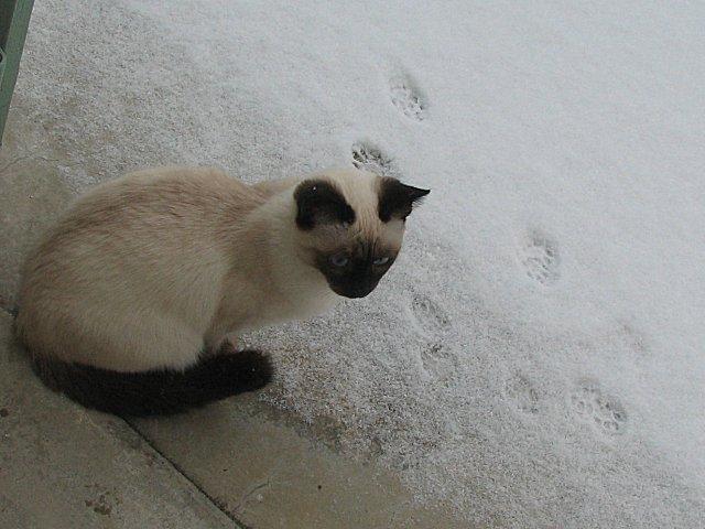 hiver01.jpg